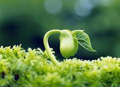 گیاهان اجتماعی اند