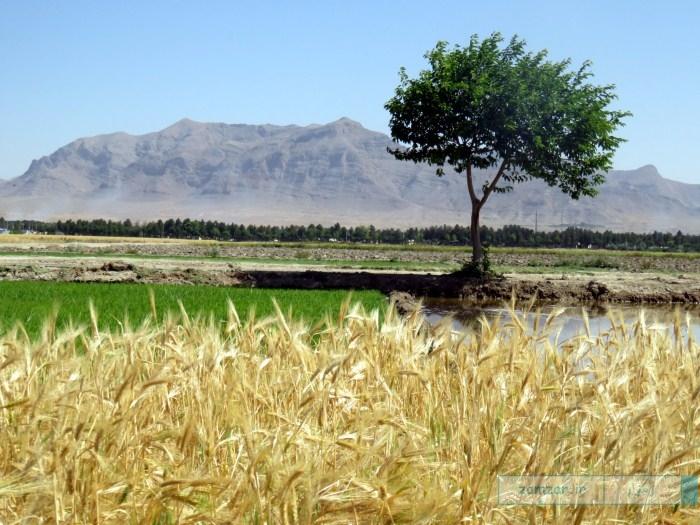 نمایی از یک مزرعه