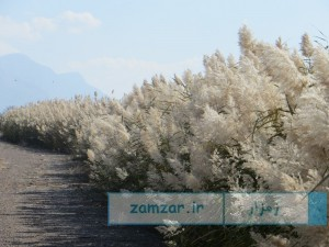 تصاویر پاییزی از شهر کرکوند