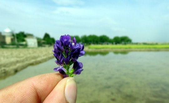 عکس از کرکوند