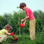 به دست خود درختی می نشانم (شعر)