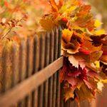 پادشاه فصلها، پاییز (مهدی اخوان ثالث)