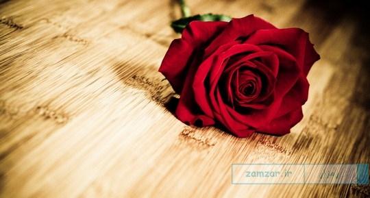 گل زیبا و عاشقانه