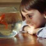 تاریخچه ۴۰۰۰ ساله پرورش ماهی