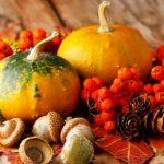 خواصی چند از میوه های پاییزی