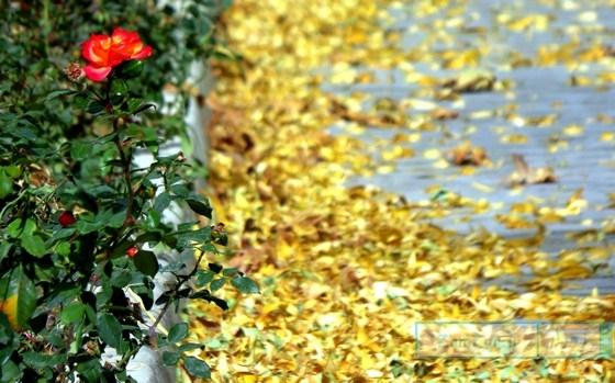 (تصاویر) گوشه ای از زیبایی های پاییز در کرکوند
