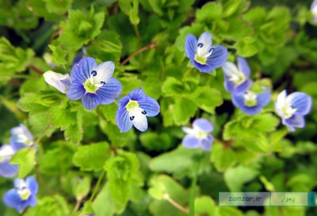 از گوشه و کنار کرکوند - گل های وحشی (یکی از پارک)