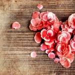سری جدید جملات عاشقانه