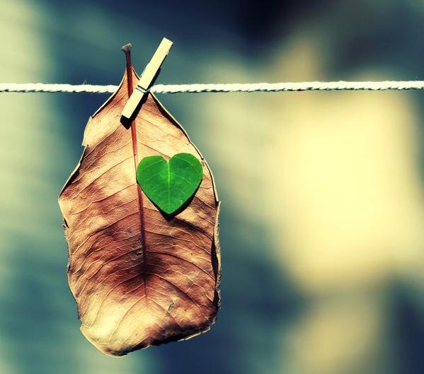 دل عاشقانه