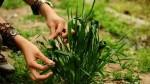متن ها و جمله های زیبا برای روز طبیعت (سیزده بدر)