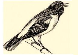 آوازخواندن پرنده