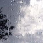 زخمــه ی زیبــای باران، می نوازد تار دل…(الیار)