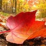 پیامک رسیدن فصل پاییز