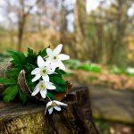 چقد دلم فصل بهار رو دوست داشت (دلنوشته)
