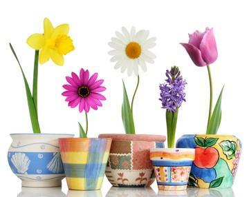 21 راز نگهداری از گلها و گیاهان بهاری در خانه