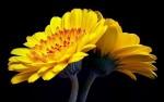 ای رستخیز ناگهان، وی رحمت بیمنتها … (مولانا)