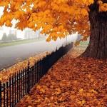 دلم خون شد از این افسرده پاییز