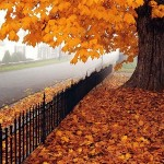 اس ام اس و جمله های زیبای پاییزی