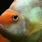 ماهیان زینتی و انرژی مثبت