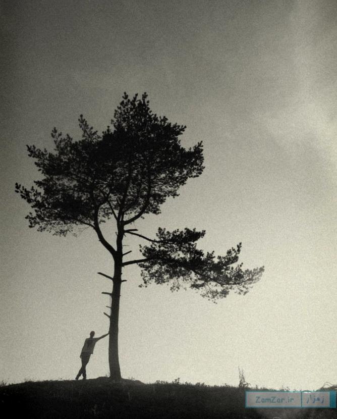 درخت کویر