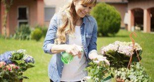 اصول نگهداری گلها