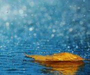 (شعر) بر شامه، نم نم باران گذشته است