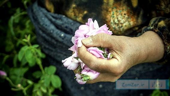 چیدن گل