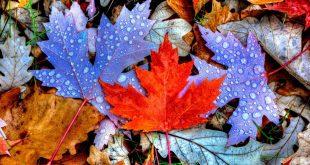 عاشقانه پاییز