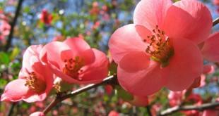 شور زندگی در بهار