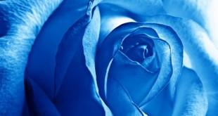 گل زیبا - اشعار -دلنوشته