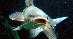 ماهیها، برترین حیوانات خانگی