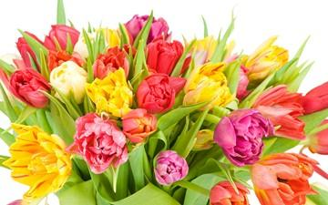 گل نشانه مشارکت و دوستی است