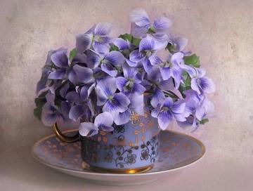گل، طبیعت و سلامت