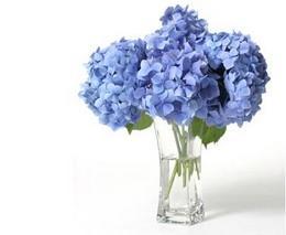 نگهداری از گلها و گیاهان بهاری در خانه