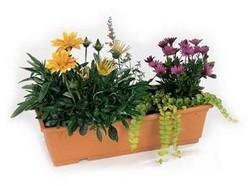 تصفیه هوا با گیاهان خانگی