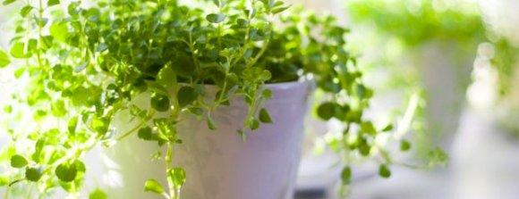 تاثیر نگاه کردن به گل و گیاه در افراد افسرده