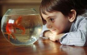 تاریخچه 4000 ساله پرورش ماهی
