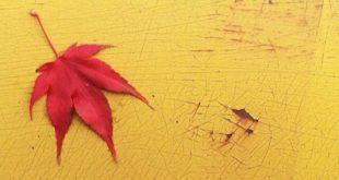 جملات زیبا درباره فصل پاییز