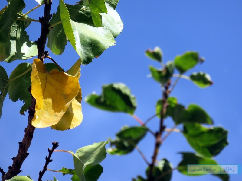 گوشه ای از زیبایی های پاییز در کرکوند