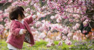 زیبایی و شکوه دل انگیز نوبهار