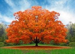 اس ام اس روز درختکاری