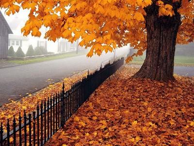 پاییز را دوست دارم بخاطر